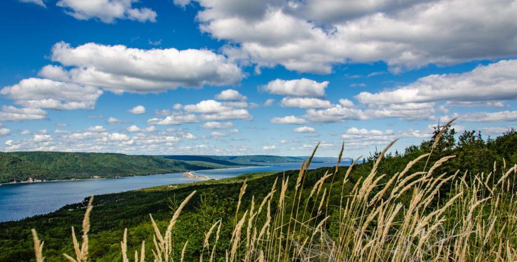 Blick über Grasähren und Waldgebiet auf die Englishtown Ferry am Cabot Trail